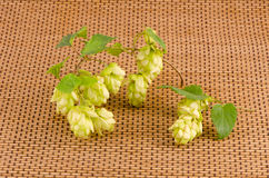 Hop plant branch with cones on wooden background Royalty Free Stock Images