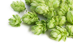 Hop plant Stock Photos