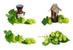 Hop plant and pharmaceutical bottles. Royalty Free Stock Images