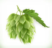 Hop plant vector icon royalty free illustration
