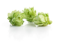 Hop plant Royalty Free Stock Photography
