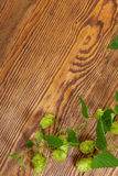 Hop plant on a wooden table Stock Photography