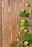 Hop plant on a wooden table Stock Photos