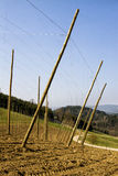 Hop poles and wire Stock Image