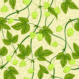 Hop seamless background Stock Photography