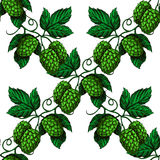Hop  seamless pattern. Hand drawn artistic beer green hope Stock Photos