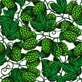 Hop  seamless pattern. Hand drawn artistic beer green hope Stock Images