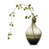 Hop shoot in a simple vase. Isolated on white Royalty Free Stock Image