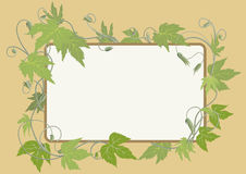 Hop surrounded frame. The rounded rectangle surrounded by hop sprouts Royalty Free Stock Images