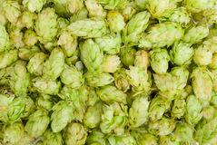 Hop texture Royalty Free Stock Photo