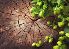 Hop twig over old wooden cracked background. Beer production ingredient. Brewery stock photo
