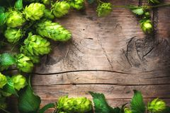 Hop twig over old wooden cracked table background. Beer production ingredient. Brewery royalty free stock photos