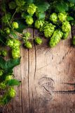 Hop twig over old wooden cracked table background. Beer production ingredient. Brewery concept stock images