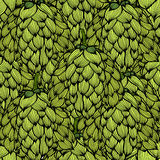 Hop vector seamless pattern. Stock Images