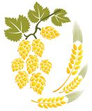 Hop and wheat. Stylized hop and wheat isolated on a white background Stock Photography