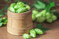 Hop. On wood barrel closeup Royalty Free Stock Image