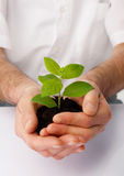 Hope. Close-up of a human hands cup a green plant Royalty Free Stock Photo