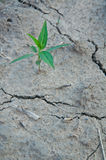 Hope drought Royalty Free Stock Photos