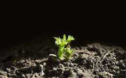 Hope,a green seedling sprout from darkness. New plant growing out of ground stock image