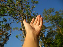 Hope. Hand stretched out toward trees Stock Photos
