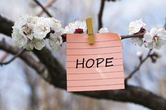 Hope in memo. Pined on tree with blooms Stock Photography