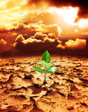 Hope of new life in a destroyed environment Stock Photography
