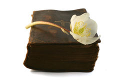 Hope in Prayer. Very old prayer book with Helleborus blossom stock photos