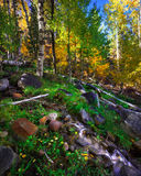 Hope Valley in the Fall. Hope Valley is accessible through Highway 89 in the Tahoe area in California Stock Image