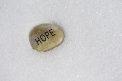 Hope Through the Winter Royalty Free Stock Images