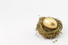 Hopeful Gold Financial Nest Egg. Hopeful, gold financial nest egg sitting in glittering gold straw nest in a metaphoric image of smart success; copy space; white Stock Photo