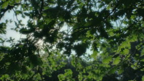 Hopeful Sunlight through Leaves. Medium wide high dynamic range tilting tracking slider shot of sunlight coming directly from the sun, appearing and disappearing stock footage