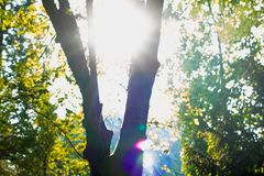 Hopeful Sunlight through tree branches in autumn Royalty Free Stock Images
