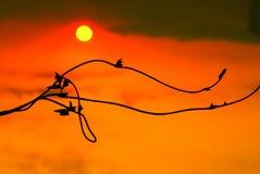 The hopefulness in sunrise Royalty Free Stock Images