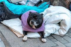 A hopeless dog lying alone and depressed on the street feeling anxious and lonely in sleeping bag and waiting for food. The. Concept of homelessness stock photo