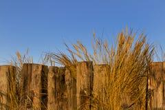 Hopema, трава marram в древесине. Стоковые Изображения