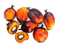 Hopen van de vers geoogste vruchten van de oliepalm op witte achtergrond Stock Afbeeldingen
