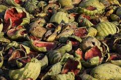 Hopen van rottende watermeloenen Schil van meloen Een verlaten gebied van watermeloenen en meloenen Rotte Watermeloenen Blijft va stock foto
