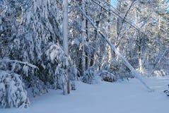 Hopen van schade door alle sneeuw worden veroorzaakt die stock foto