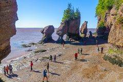 hopewell χαμηλή παλίρροια βράχων στοκ εικόνες