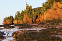 Hopewell-Felsen in Kanada bei Sonnenaufgang Stockbild