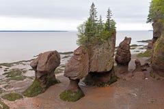 Hopewell oscilla nella bassa marea, Nuovo Brunswick, Canada Fotografie Stock Libere da Diritti