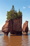 Hopewell Rocks Royalty Free Stock Photo
