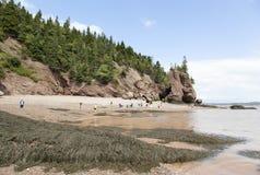 Hopewell Rocks Beach Royalty Free Stock Image