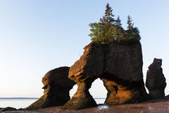 Hopewell Rocks in Canada at sunrise Royalty Free Stock Images