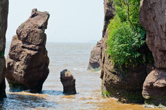 Hopewell Rocks Royalty Free Stock Photography