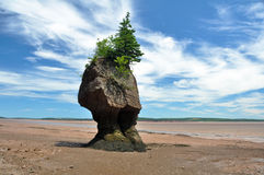 Hopewell Rocks at low tide Royalty Free Stock Photography