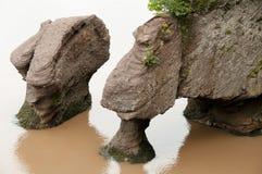 Hopewell Rocks - New Brunswick - Canada Royalty Free Stock Image