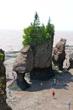 Hopewell Rocks, New Brunswick, Canada. Hopewell Rocks from above at low tide, New Brunswick,  Canada Stock Image