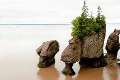 Hopewellrotsen - New Brunswick - Canada stock afbeelding