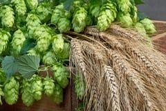 Hopfen Gerste und Weizen Stockbilder